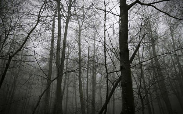 A Forest[Un bosque], obra en video de Max de Esteban