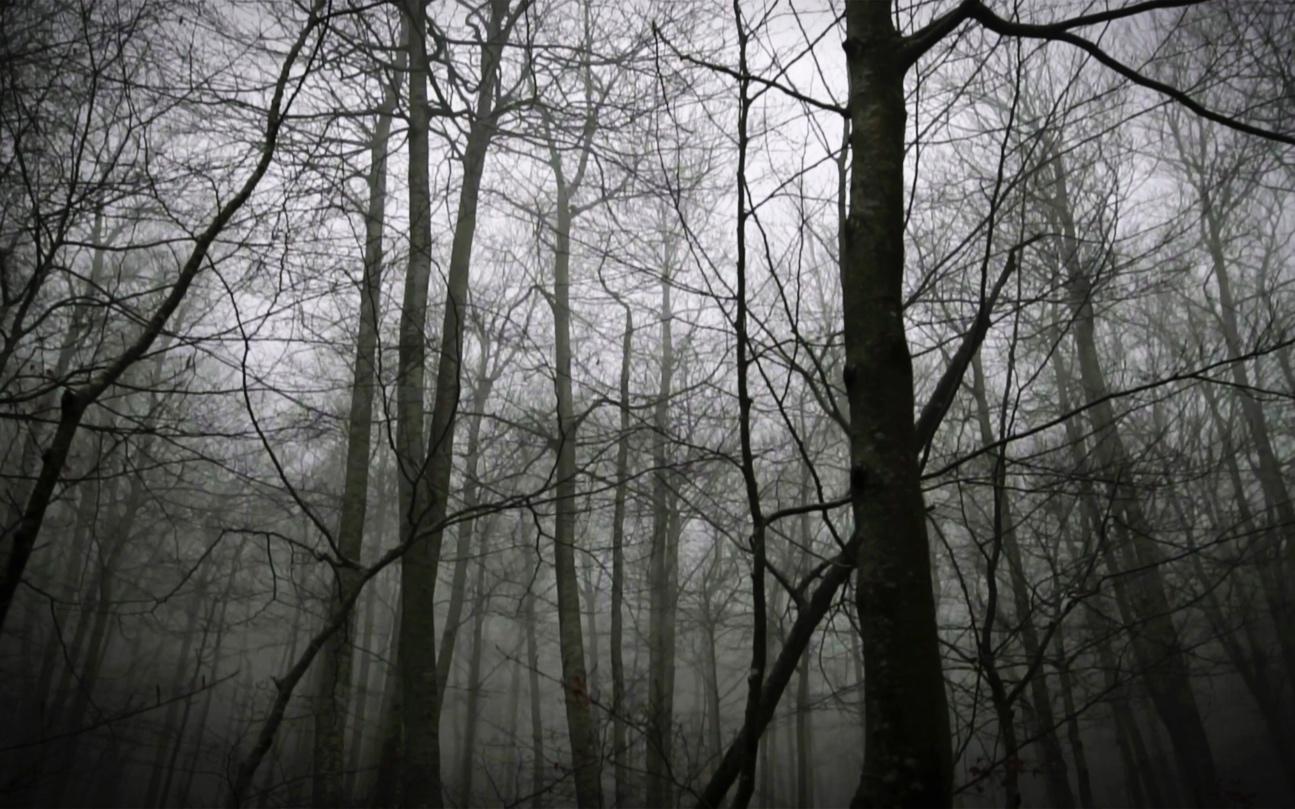 <p><em>A Forest[Un bosque],</em> obra en video de Max de Esteban</p>